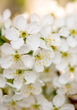Spring background of flowers Stock Photos