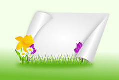 Spring background with flowers Stock Photos