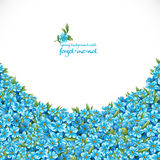 Spring background with forget-me-not Stock Image