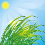 Spring background with fresh grass Stock Photography