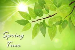 Spring background with fresh green leaves. Illustration of Spring background with fresh green leaves stock illustration