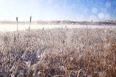 Spring background with  frost grass Stock Images