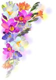Spring background with gentle freesia flowers. Vector greeting background with pictorial freesia flowers Royalty Free Stock Image