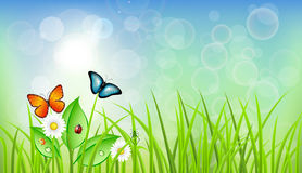 Spring Background with Grass Stock Photos