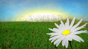 Spring background with grass and aster Stock Image
