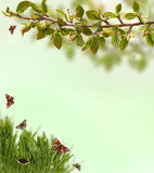 Spring background with grass, butterflies and Royalty Free Stock Photography