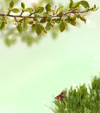Spring background with grass, butterflies and Royalty Free Stock Images