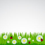 Spring background with grass chamomile Stock Photo