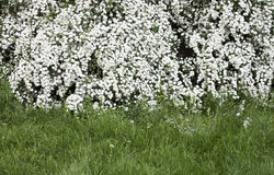 Spring background - RAW format Royalty Free Stock Photos