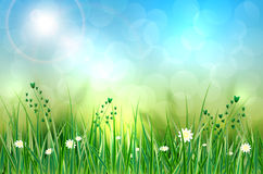 Spring background with grass, flowers and blurred background. Vector illustration Royalty Free Stock Images