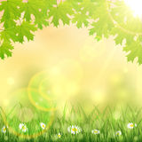 Spring background with grass and maple leaves Royalty Free Stock Photography