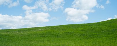 Spring background, with grass. And sky Royalty Free Stock Image