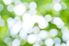 Spring background. Green foliage with bokeh effect Stock Photo