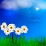 Spring background with green grass and blue sky. Place for text. Vector illustration Royalty Free Stock Image