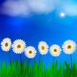 Spring background with green grass and blue sky. Place for text. Vector illustration Royalty Free Stock Images