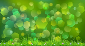 Spring background with green grass Royalty Free Stock Image