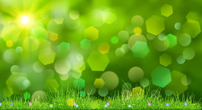 Spring background with green grass Royalty Free Stock Photography