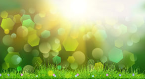 Spring background with green grass Stock Photo