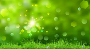 Spring background with green grass Royalty Free Stock Photo