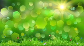 Spring background with green grass Stock Photos