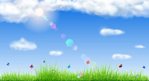 Spring background with green grass Stock Images