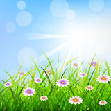 Spring background with green grass, sunlights an flowers Royalty Free Stock Photography