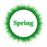 Spring background with green grass Stock Image