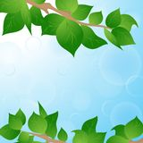Spring background with green leaves. Heaven and spring leaves on a tree background Royalty Free Stock Photos