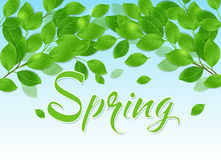 Spring background with green leaves. And blue sky Stock Photo