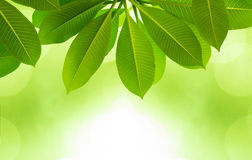 Spring background with green leaves Stock Images