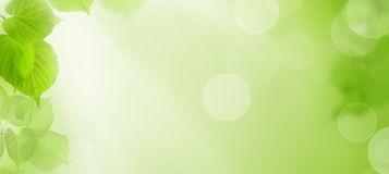 Spring Background with Green Leaves and Sunshine Stock Photo