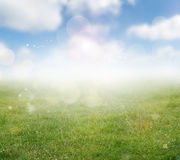 Spring background. Green meadow and blue sky spring background Royalty Free Stock Photo