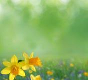 Spring background Stock Image