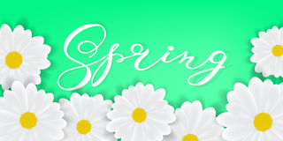 Spring background with hand writening lettering Spring word, white daisies or gerbers. Spring background. Spring word, white daisies or gerbers Stock Image