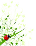 Spring  background with ladybug Royalty Free Stock Images