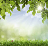 . spring background Stock Photos