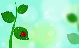 Spring background with ladybug Stock Images