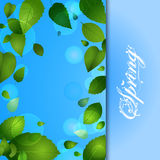 Spring background with leafs and text Stock Photos