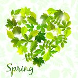 Spring background from leaves . Royalty Free Stock Image