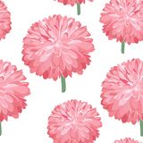 Seamless pink flower pattern. Spring background with lush Chrysanthemum. Colorful aster bud. Royalty Free Stock Photos