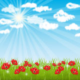 Spring background. Meadow. Royalty Free Stock Images