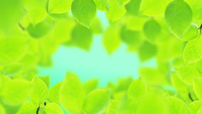 Spring background, natural frame of beautiful green leaves. Spring background, Natural frame of beautiful green tree leaves reveals the soft light of the sun stock video