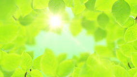Spring background, natural frame of beautiful green leaves. Spring background, Natural frame of beautiful green tree leaves reveals the soft light of the sun stock video footage