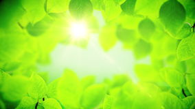 Spring background, natural frame of beautiful green leaves. Spring background, Natural frame of beautiful green tree leaves reveals the soft light of the sun stock footage