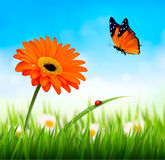 Spring background. Orange beautiful flower and a butterfly. Vect. Or Royalty Free Stock Photo
