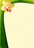 Spring background with an orchid Royalty Free Stock Photos
