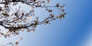 The spring background Royalty Free Stock Photos