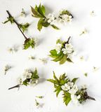 Spring background with pear blossom flowers. stock images
