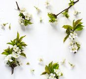 Spring background with pear blossom flowers. stock image