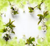 Spring background with pear blossom flowers. stock photography